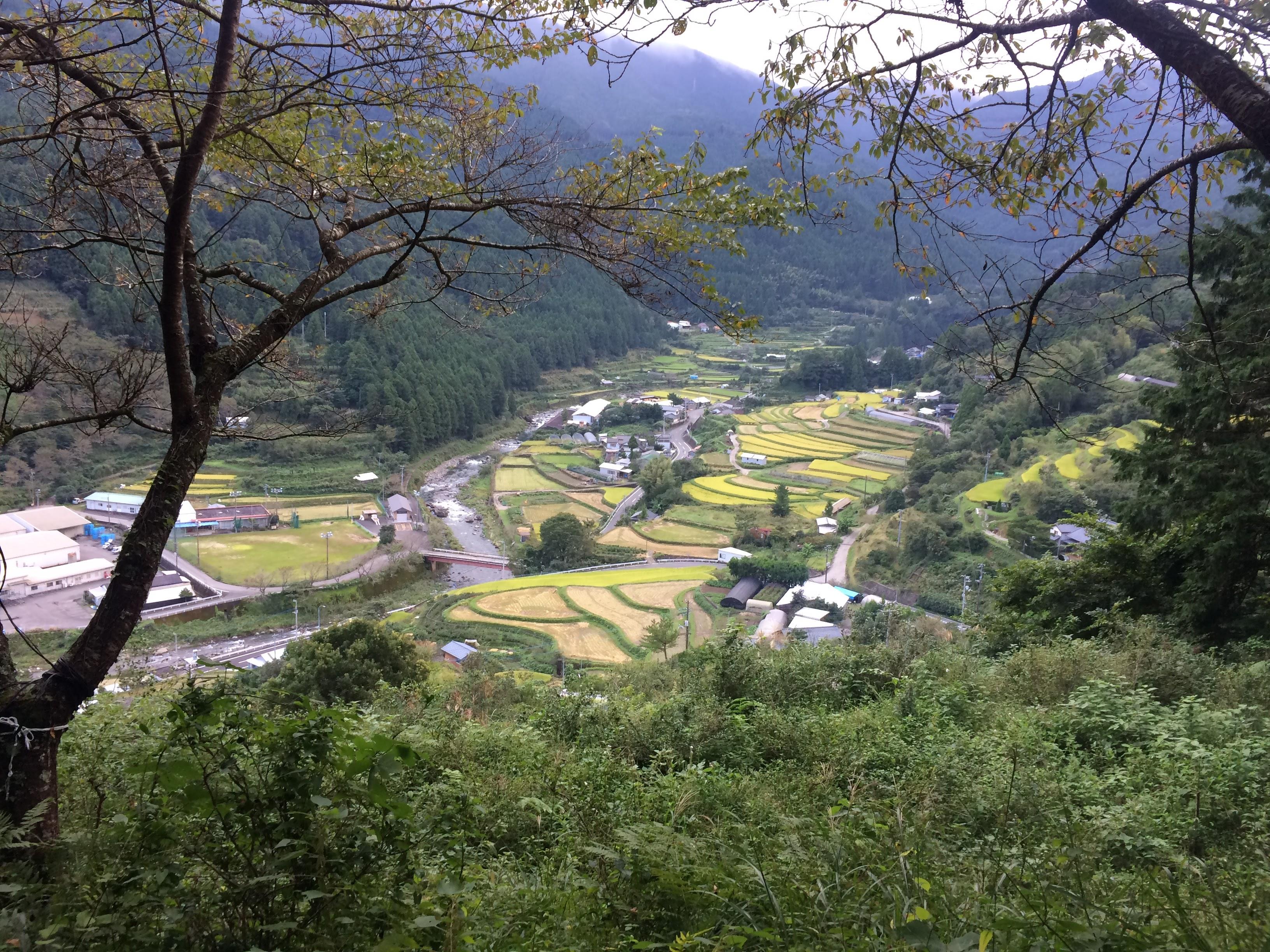 上勝町の棚田